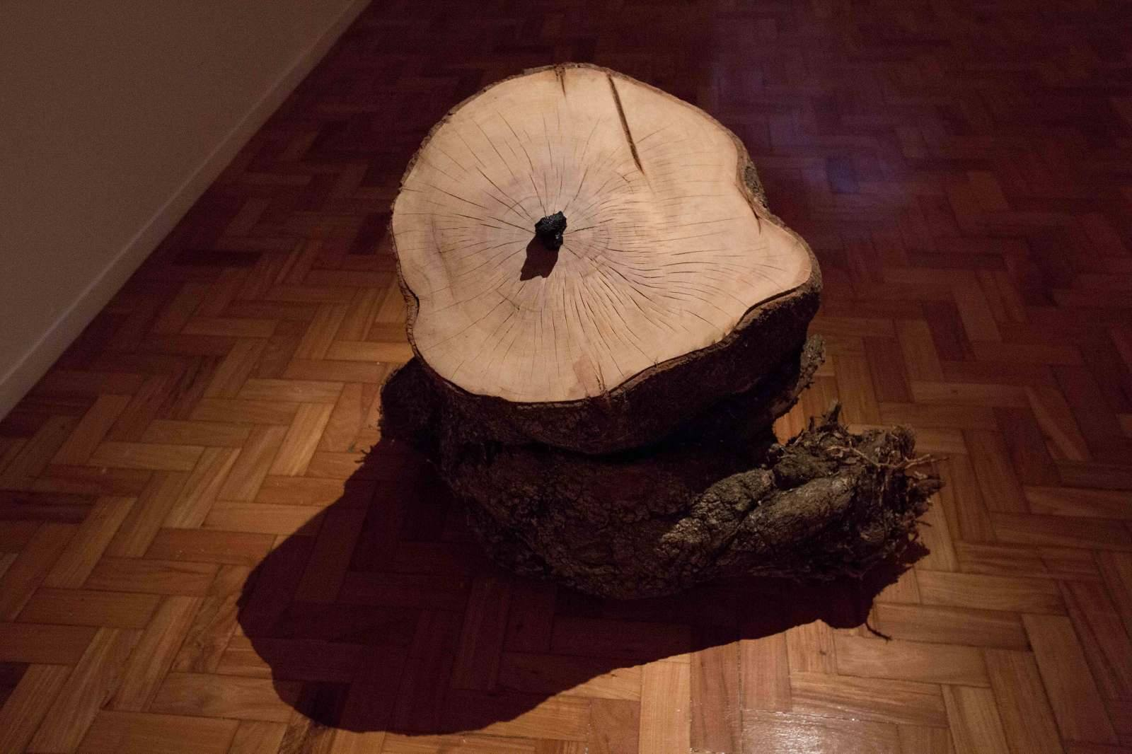 "Mari Fraga, ""Gerações"", 2016 --- Wood and coal"